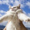 猫の正しい持ち方と負担をかけない安全な方法