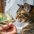 猫がトカゲを食べた場合の対処法