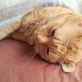 猫が寝ない!気になる原因を探して対策を立てよう!