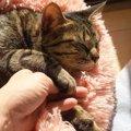 猫ちゃんの寝顔が可愛すぎてついイタズラ!