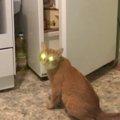 「見たニャ…?」目が怖〜い猫ちゃん