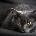 猫もうつ病になる?症状や原因、ケアの方法