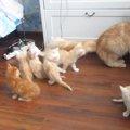 お母ちゃんはちょっと休憩ニャ…この後、子猫達に悲劇が!