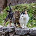 猫よけスプレーは効果ある?正しい使い方やおすすめ商品まで
