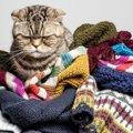 猫に「服」は着せても良いの?メリットとデメリット