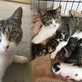 育児放棄された子猫たち…新たなママ猫が7匹を育て上げる姿に感動!