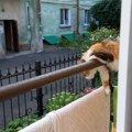 そんな所で日向ぼっこ!?優れたバランス感覚の持ち主、それが猫!