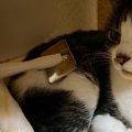 猫のトリミングと自宅でのお手入れの仕方