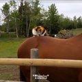 乗馬を嗜む猫ちゃん。準備は出来たものの…