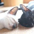見たら幸せになれるかも!?眠る猫たちが形作っていたものは……