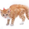 猫のしっぽが膨らむ時の意外な気持ちとは