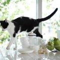 超危険!猫がキッチンやリビングで起こしやすい事故5つ
