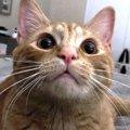 猫の『ひげ』に隠された能力4つ