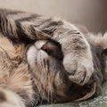 猫もおならをする?臭い時の理由や対処法