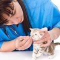 綿棒を使って猫の鼻掃除をする方法