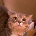 猫のダンボールハウスに必要なものや型別の自作方法