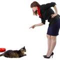 猫の育て方の基本編!準備としつけについて