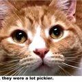 2人の飼い主から捨てられた猫、その結果...
