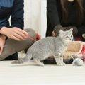 初めて猫ちゃんを迎える前に準備しておく事