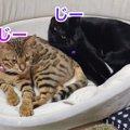 一緒にお昼寝♪仲良くなってきた2匹の猫さん