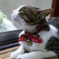 猫に首輪を付ける必要性とその際の注意点