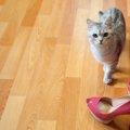 いつかは使ってみたい「ハイブランド」の猫用品4選