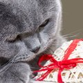 買って楽しい「猫助け」チャリティーグッズ3選