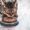 猫のプレミアムフードって何?