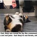 駅構内に住み着いたホームレス猫~イスタンブール~