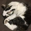 猫の寝方でわかるその気持ち!色々なパターンと信頼度とは