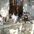可愛い猫がいっぱい!猫好き必見のおすすめスポット9選
