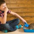 猫のうんちが臭い原因とにおいを軽減させる3つの方法