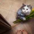猫が玄関で出迎えてくれる5つの理由