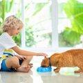 ご飯は飼い主の前でしか食べない!困った猫ちゃんの6つの理由