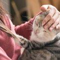 猫の里親になるには条件がある!守りたいルールや譲渡の流れと注意点