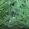 「子猫ハンター」が見つけた強気な子猫と、のんびり迎える先住猫たち