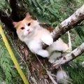 「降りたくないにゃ!」わざわざ救助しに登って来たのに不機嫌な猫たち