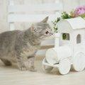猫にバラ(薔薇)は安全な花?お部屋で飾る時の注意点バラ