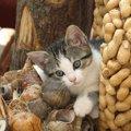猫が中毒になってしまう危険な食べ物3つ