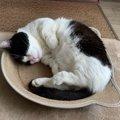 猫が『質の良い睡眠』をとるためにすべき3つのこと