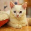 子猫におやつはいつから与えても良い?時期や量、おすすめ商品まで