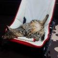 猫が寝てることが多い理由について
