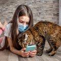 【噛む】スマホを攻撃する猫の5つの心理【踏む】