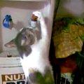 猫ちゃんセルフでお湯を飲む