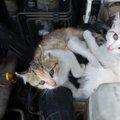 猫バンバンとは?猫の命を守るための方法とその効果
