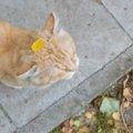 猫が花粉症になるのはどうして?対策の方法