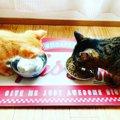 猫がごはんを手でさわるのはなぜ?パターン別の理由3つ