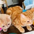 『美味しい?ねぇ、美味しい?』朝食見守り隊!子猫コンビが律儀でか…