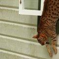 猫の脱走防止!場所別でみる対策の方法とおすすめ商品