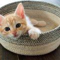 生後2週間の子猫の育て方!正しい保育方法と注意点